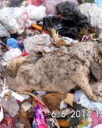 Doğanşehir'de Köpek Katliamı Foto Galeri