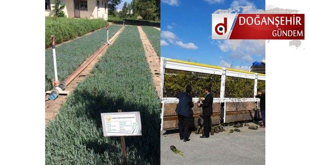 Çiftçilerin Dikkatine  Malatya Belediyesinde 300.000 Meyve Fidanı Ücretsiz Dağıtacak