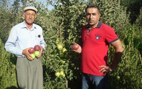 Elmanın kilogramı bahçede 1 lira ile 1 lira 25 kuruş