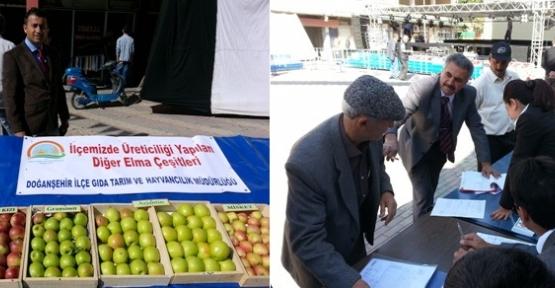 Festival İçin Elmalar Görücüye Cıktı