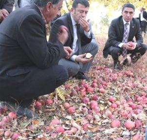 Malatya Milletvekili Veli Ağbaba  Elma Üreticilerin Sorunlarını Dinledi