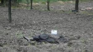 Söğüt de, 80 Yaşındaki   Adam Tarlada  Ölü Bulundu